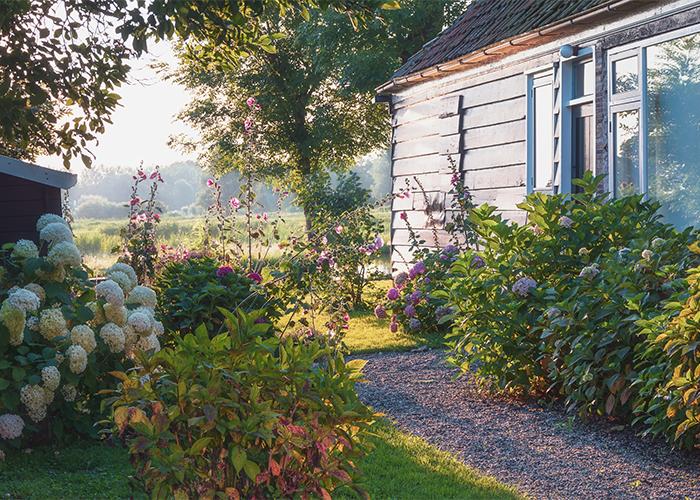 Få 15% rabatt på blommande buskar!